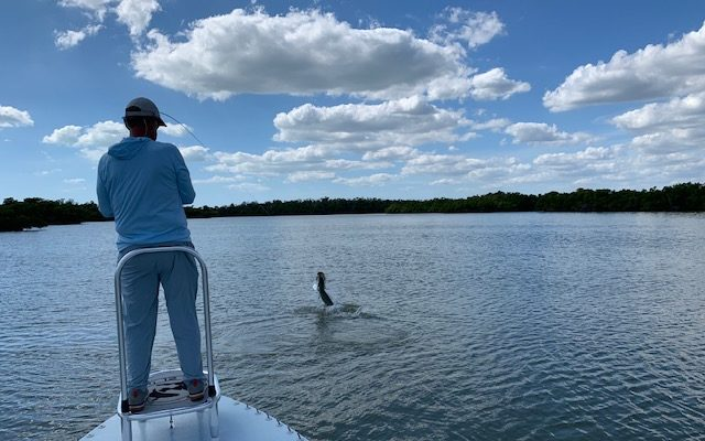 Everglades Snook, Redfish & Tarpon Fishing Report By Capt. Wright Taylor