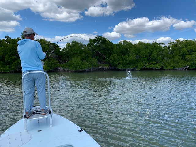 Everglades, Marco Island and Naples Florida tarpon fishing charters.